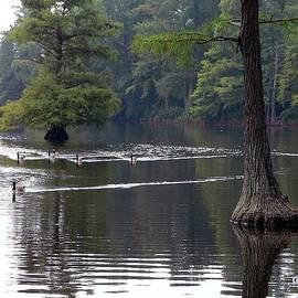 Al Powell Photography USA - Cypress Lake
