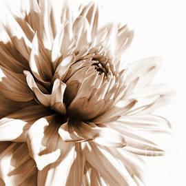 Jennie Marie Schell - Dahlia Sepial Flower