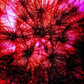 Judi Bagwell - Dandelion Fireworks