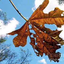 Kaye Menner - Dead Leaf