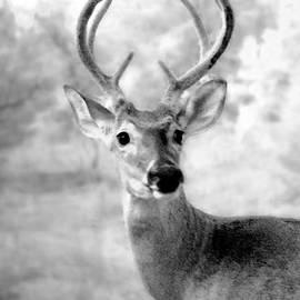James Granberry - Deer 12