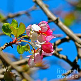 Maggie Vlazny - Demure Cherry Blossom