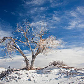 Ralf Kaiser - Desert Tree In White Sands