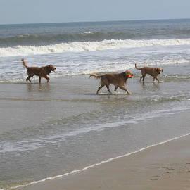 Jim Vansant - Dogs at the Beach