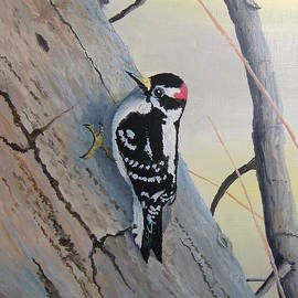 Norm Starks - Downy Woodpecker