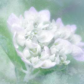Brenda Bryant - Dreaming Floral