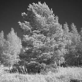 Tommi Saarela - Dreaming In Infrared