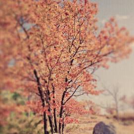Tatiana Parmeeva - Dreamy tree