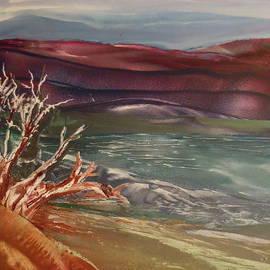 Terry Sussman - Driftwood