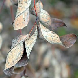 Lisa  Phillips - Dry Leaves
