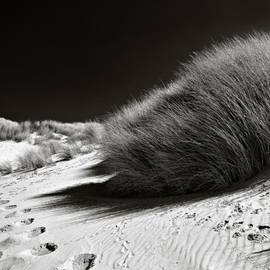 Dave Bowman - Dune Grass
