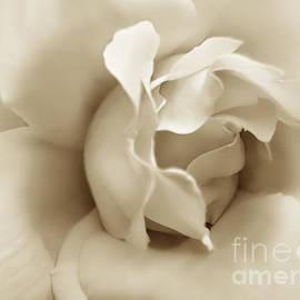 Jennie Marie Schell - Dusty Sepia Rose Flower