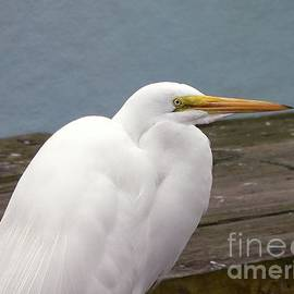 Al Powell Photography USA - Egret on the Dock