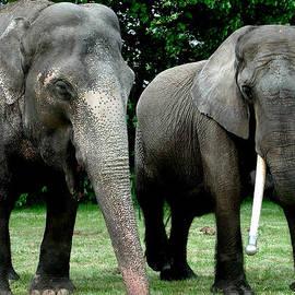 Colette V Hera  Guggenheim  - Elephant Meeting