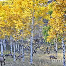Nava  Thompson - Elk in RMNP Colorado