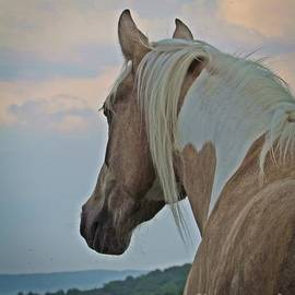Laurinda Bowling - Equine Study - Paint Horse