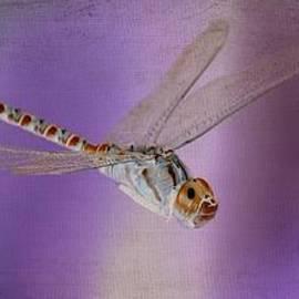 Fraida Gutovich - Ethereal Dragonfly