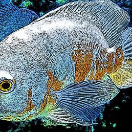 Colette V Hera  Guggenheim  - Exotic Fish