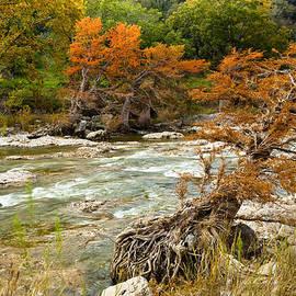 Mark Weaver - Fall colors along the Pedernales River