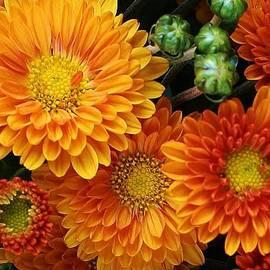 Bruce Bley - Fall Colors