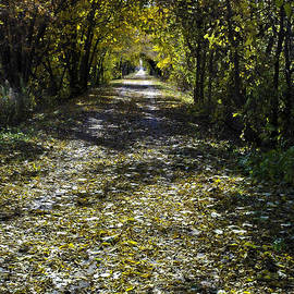 LeeAnn McLaneGoetz McLaneGoetzStudioLLCcom - Fall on Macomb Orchard Trail