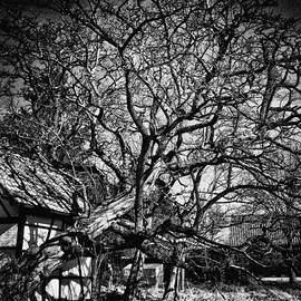 Philip Sweeck - Fallen Tree and Chapel