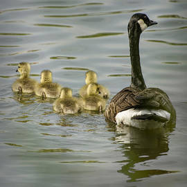 Heather Applegate - Family Swim