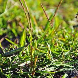 Al Powell Photography USA - Female Mantis