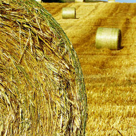 Andrea Arnold - Field of Hay