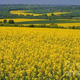 David Birchall - Fields Of Gold