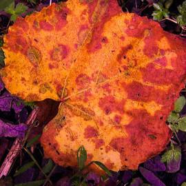 Gordon H Rohrbaugh Jr - First Sign of Autumn