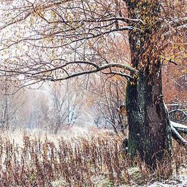 Jenny Rainbow - First Snow. Old Tree