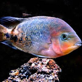 Colette V Hera  Guggenheim  - Fish joy in Denmark