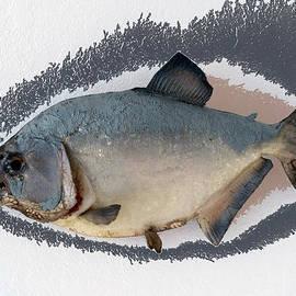 Thomas Woolworth - Fish Mount Set 04 C