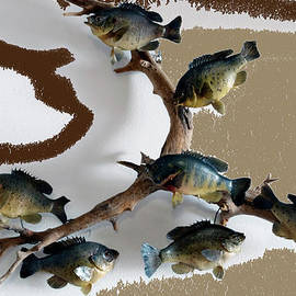 Thomas Woolworth - Fish Mount Set 05 C