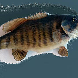 Thomas Woolworth - Fish Mount Set 10 B