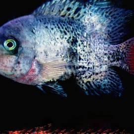 Colette V Hera  Guggenheim  - Fish swim joy  in Denmark