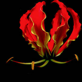 Kelly Headrick - Flame Lilly