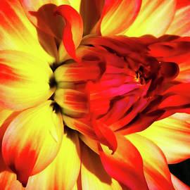 TONY GRIDER - Flaming Blossom