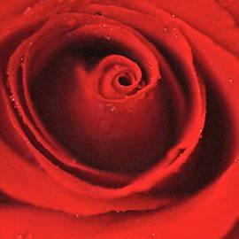 Estelita Asehan - Flaming Red