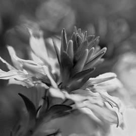 William Martin - Floral Bloom