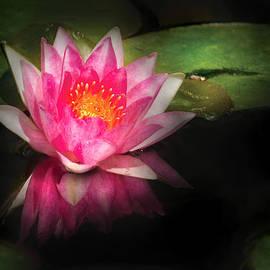 Mike Savad - Flower - Lotus - Nymphaea Gloriosa - Intensity