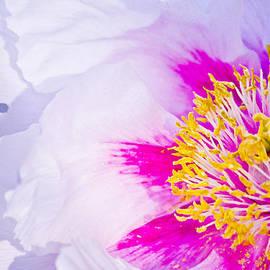 Amina Dabbashi - Flower