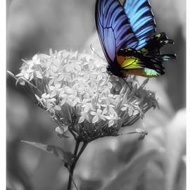 Sergey Korotkov - Flower and butterfly