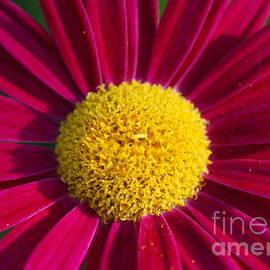 Christy Phillips - Flower