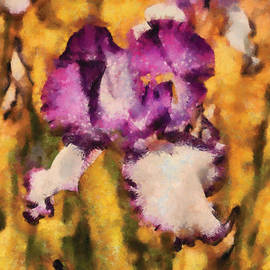 Mike Savad - Flower - Iris - Diafragma violeta