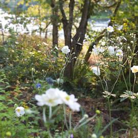 Belinda Greb - Flowers Along the River