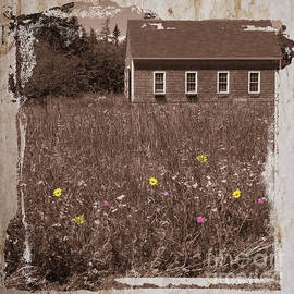 Jim Wright - Flowers in the field