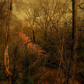 Nina Fosdick - Flowers in the Forest