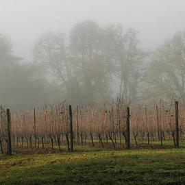 Jean Noren - Foggy Vineyard